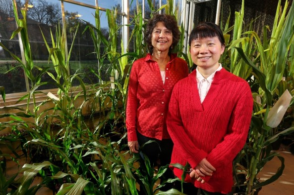 Dr. Eve Syrkin Wurtele (left) and Dr. Ling Li (right). Photo by Christopher Gannon.