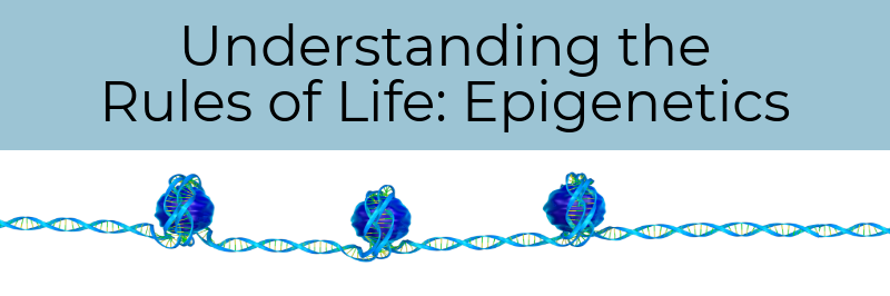 """A headline banner reading """"Understanding the rules of life: epigenetics"""" underneath of which is a cartoon of a short strand of DNA wrapped around three histones like three beads on a single string"""