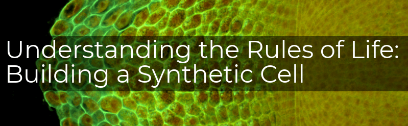 """A title banner reading """"understanding the rules of life: building a synthetic cell"""" over an image of a plant root tip with each cell glowing green due to GFP attached to the cell wall"""